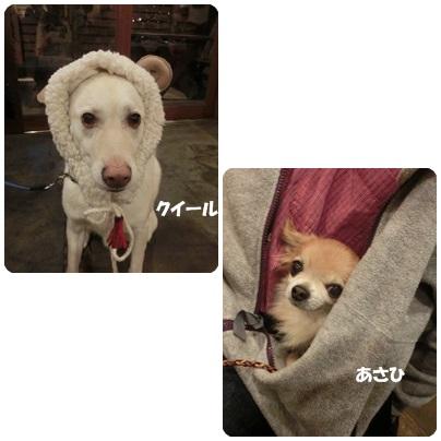 2014-12-118.jpg