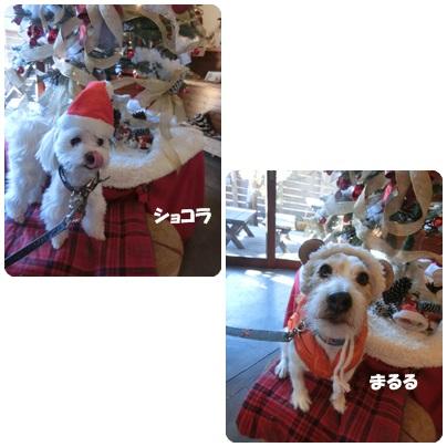 2014-12-125.jpg