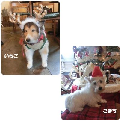 2014-12-50.jpg