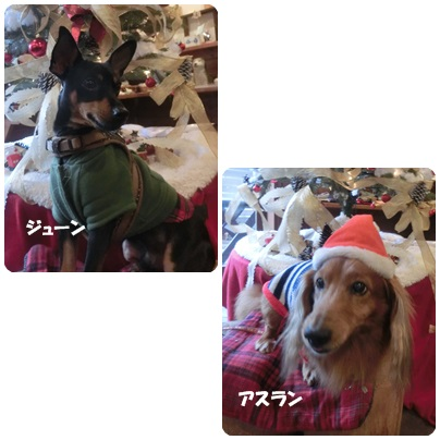 2014-12-51.jpg
