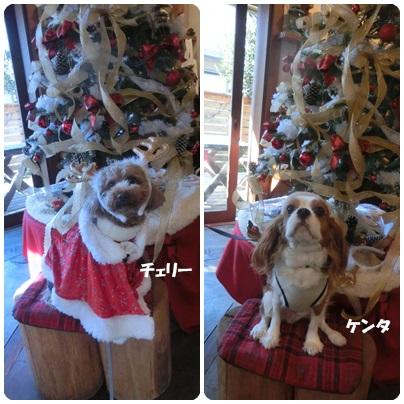 2014-12-61.jpg
