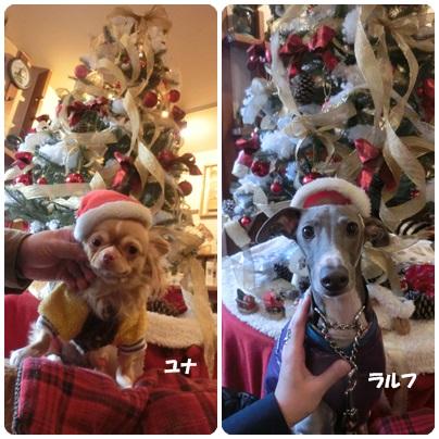 2014-12-77.jpg