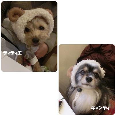 2014-12-91.jpg