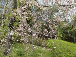 鏡山公園20150421-1