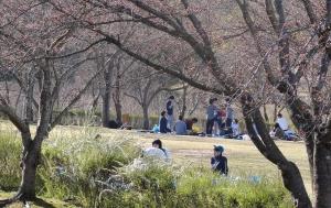 鏡山公園でアコーディオン20150330-1