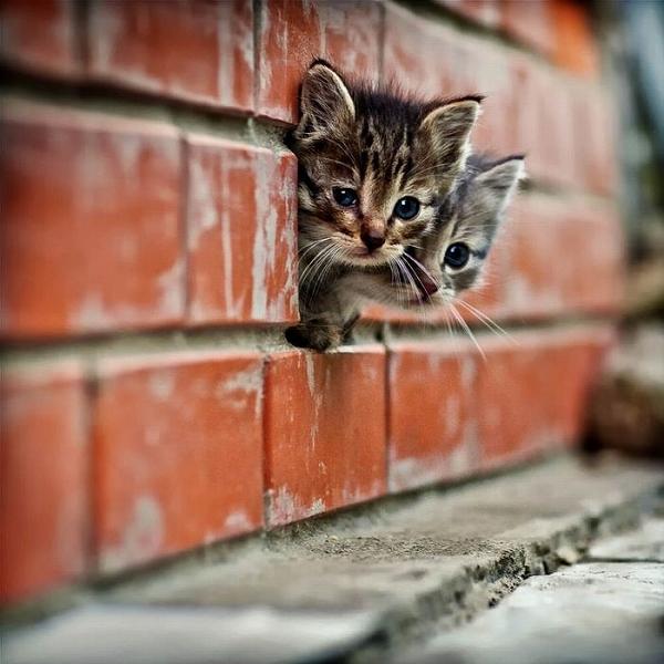 cats_cats_10.jpg
