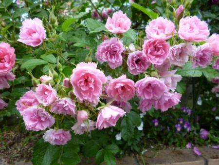 バラの庭B