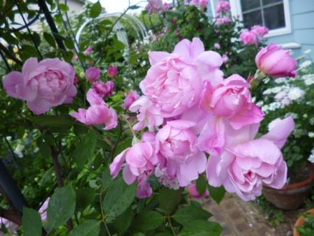バラの庭F