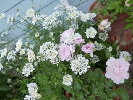 バラの庭G