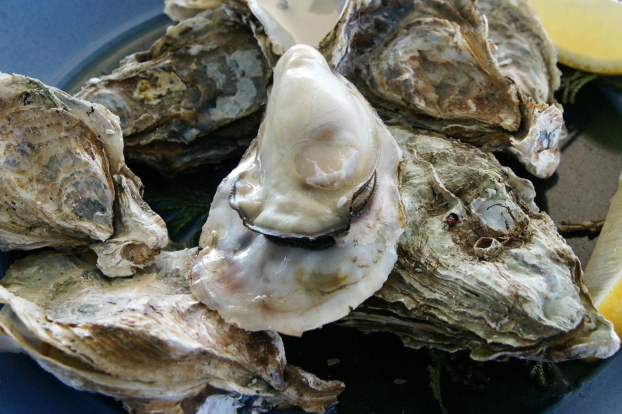 Oyster_Ushimado03s[1]