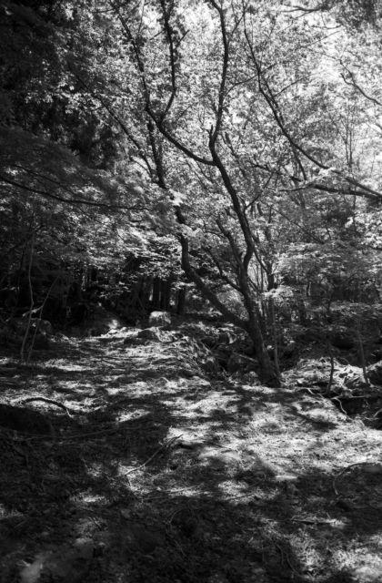 深山幽谷61a