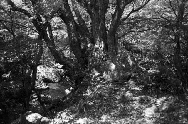 深山幽谷61b