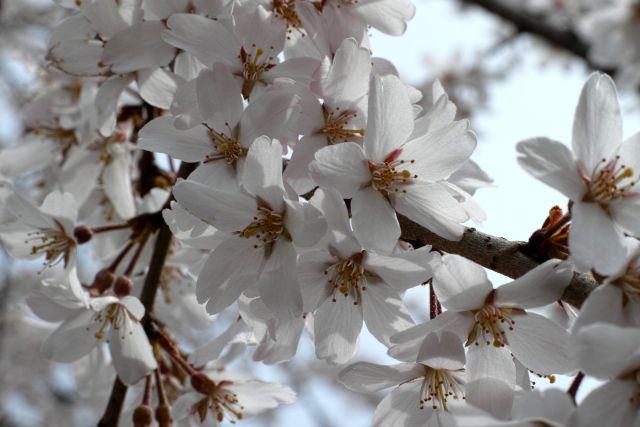春の予感11a