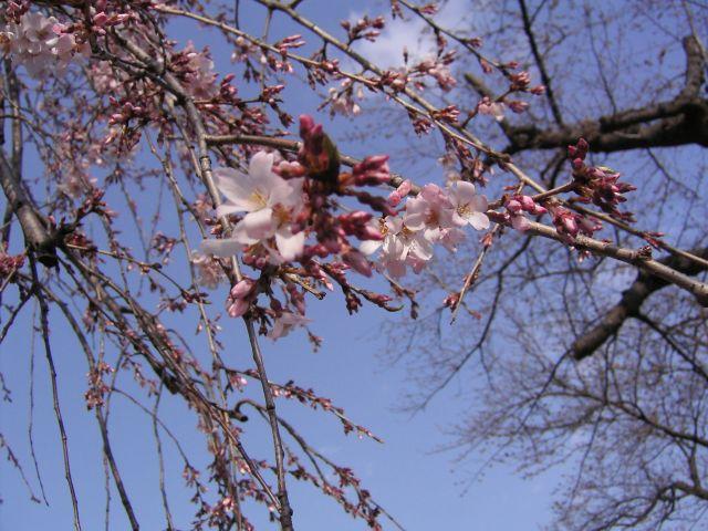 春の予感10b