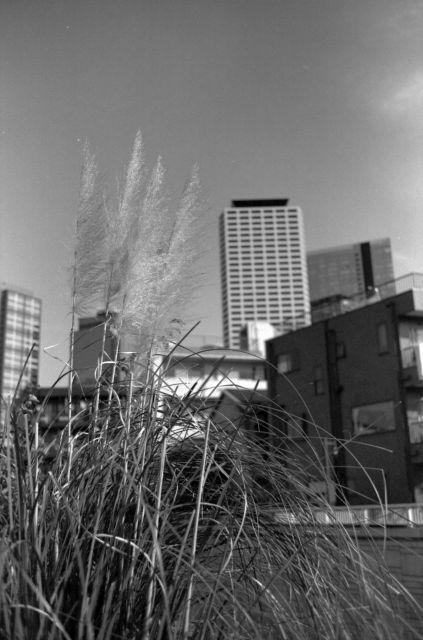 街の秋2014-12b