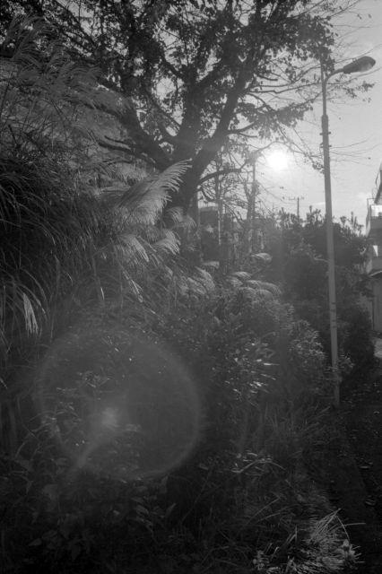 街の秋2014-12c