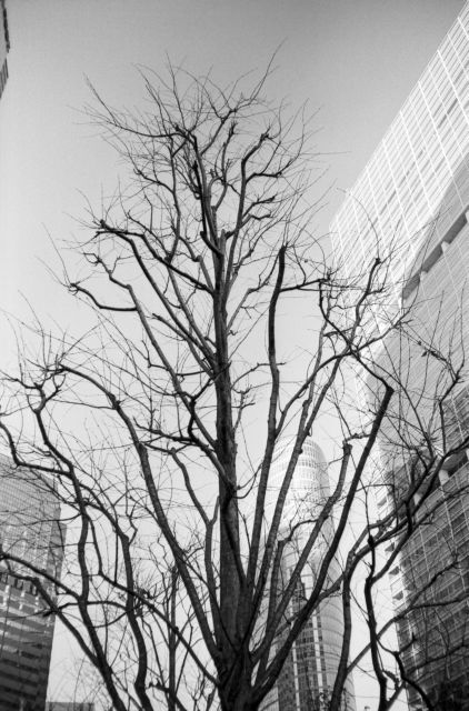 冬景色2015-05a