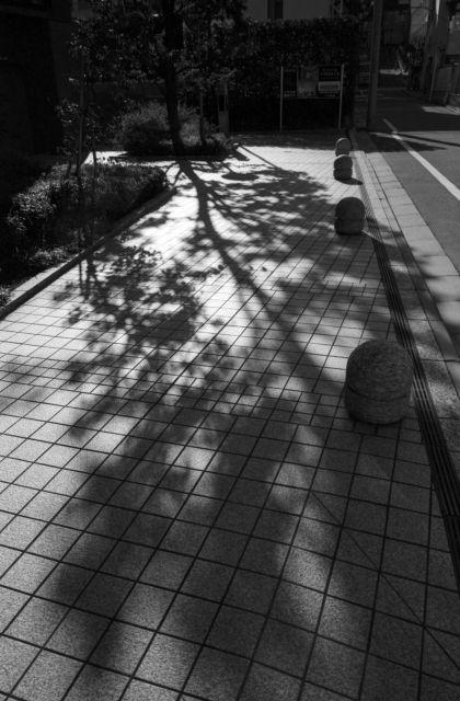 冬景色2015-10a