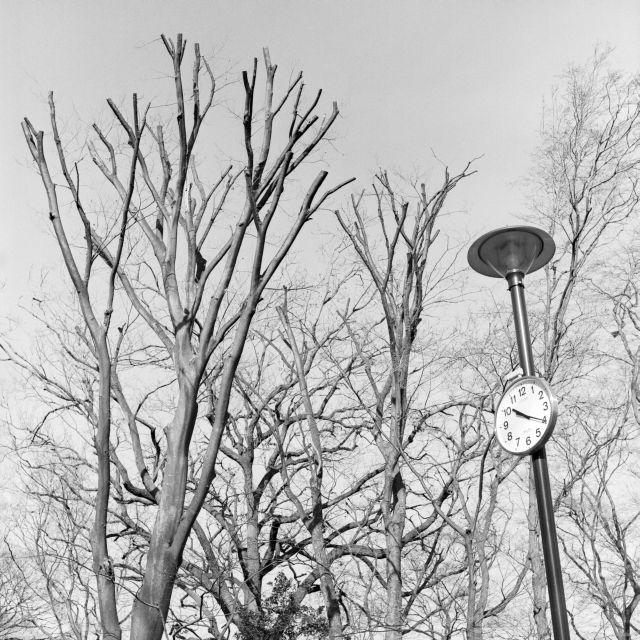 冬景色2015-11a