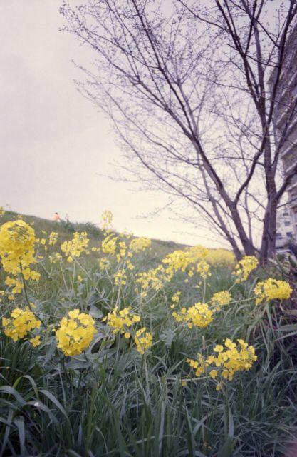 春の予感12a
