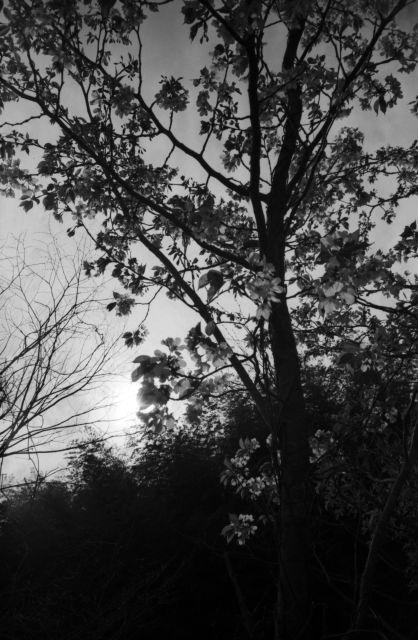 深山幽谷50d