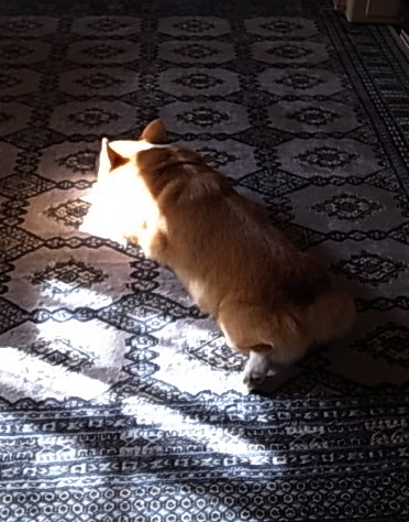 陽だまり1