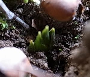 春食タケノコ5