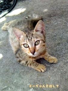 生まれたばかりのちび猫のクロっぽい方(キジトラ)