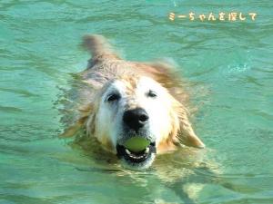 宮古島の海で泳ぐケフィ