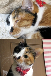141226_cat02.jpg