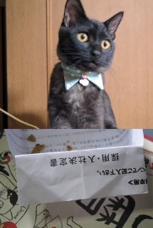 141226_cat03.jpg