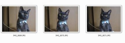 141226_cat05.jpg