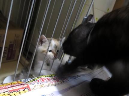 150608_cat02.jpg