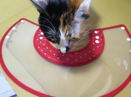 150608_cat10.jpg