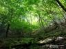 尾白川渓谷道4、新緑と苔