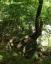 尾白川渓谷道8、岩に根を張る木