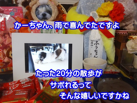 0226-04_2015022615105259e.jpg