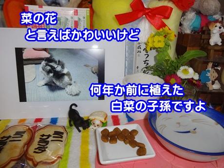 0321-01_20150321175237750.jpg