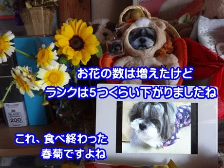 0427-05_20150427171555a04.jpg