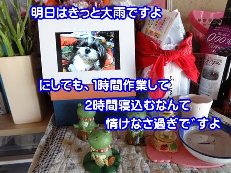 0531-04_20150531170157049.jpg