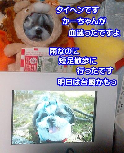 P_20150318_150818.jpg