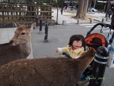 娘に集る鹿