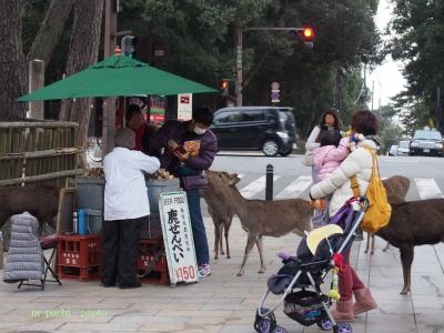観光客を襲う鹿