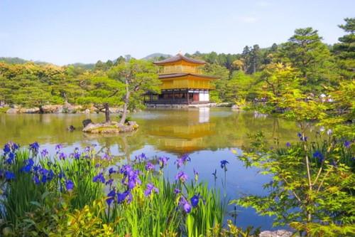 11位 金閣寺