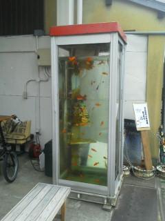 水槽になった電話ボックス