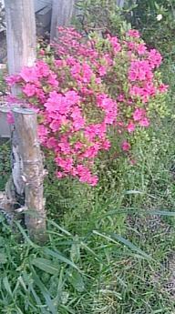 flowers@20150501.jpg
