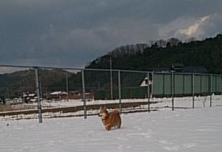 mfy@20150104dog-run03.jpg