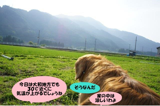 DSC06246.jpg