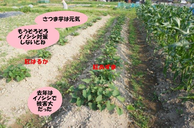 DSC06264.jpg