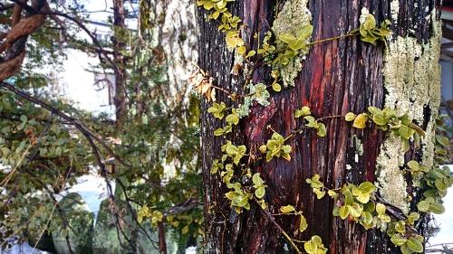春の雰囲気が漂う樹皮